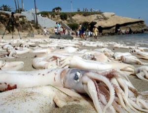 Squid beached copy