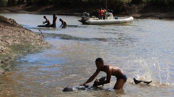 Madagascar whalesWEB